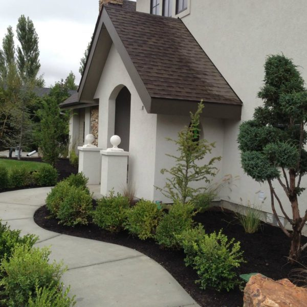 Tree & Shrub Pruning & Maintenance