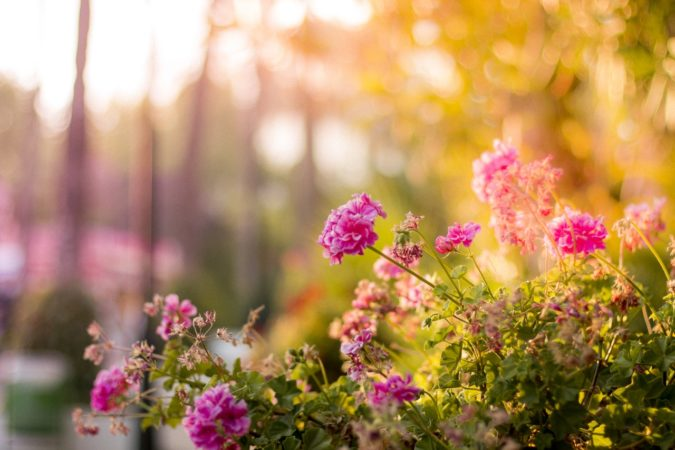 5 Late-Summer Gardening Tips