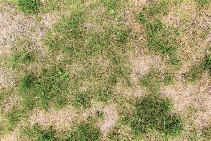 Recognizing Turf Damage in Your Idaho Lawn and How to Improve it