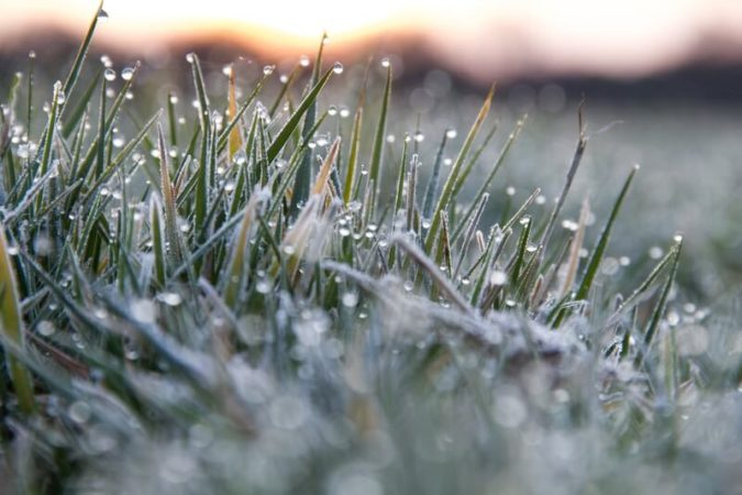 When and Why You Should Use Winter Fertilizer