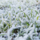 When Winter Hits, Lawn Care is Not Over