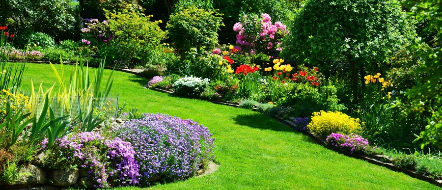Let Pest Control Companies In Meridian Idaho Resolve Insect Issues In Your Yard Diamond Lawns